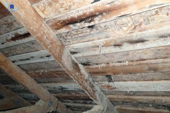 Các mẹo tẩy nấm mốc trên gỗ, tường, vải trong nhà nhanh gọn